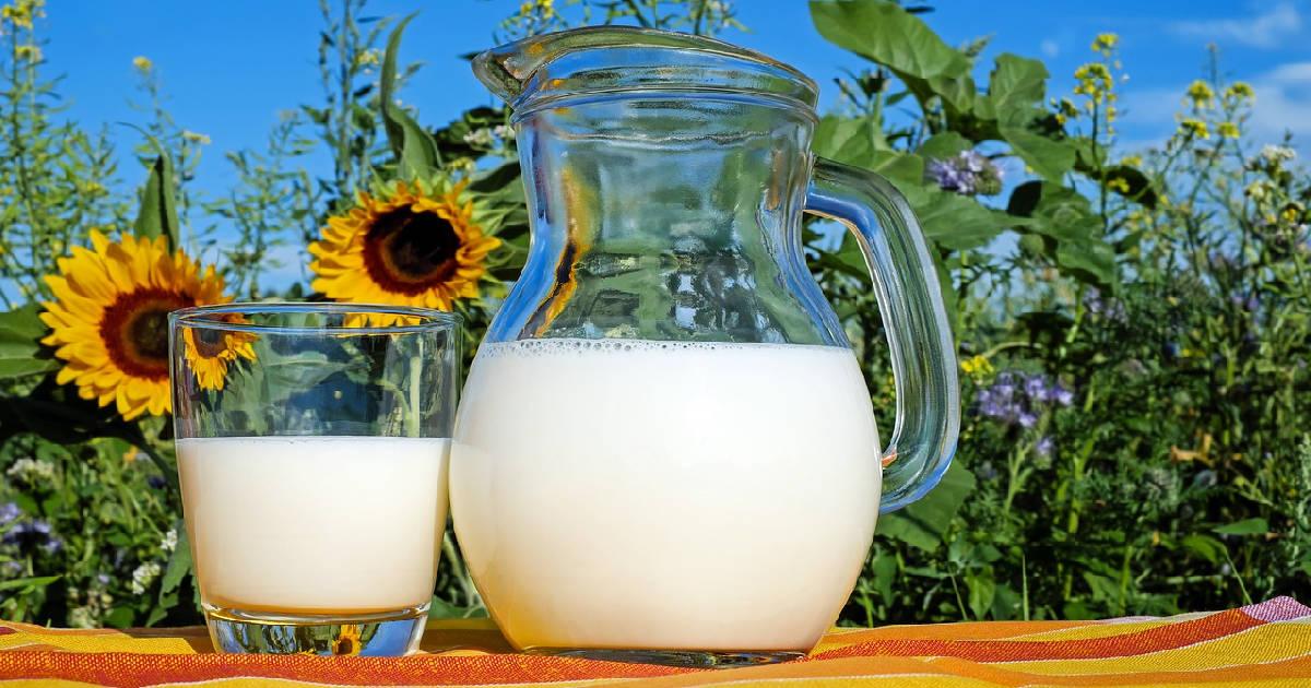 Milch - gesund oder ungesund Titelbild
