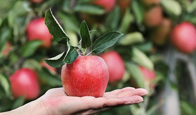 Apfel mit Apfelbaum im Hintergrund